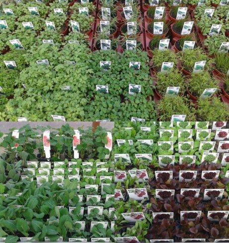 Groente en kruidenplanten